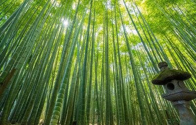 日帰りで別世界!鎌倉・報国寺の竹林でそよ風と抹茶を楽しむ旅