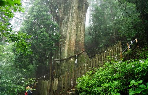 和歌山で泊まりたい!風情ある老舗旅館・文化財のある旅館