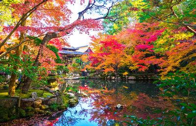 京都市左京区の紅葉の名所!哲学の道・北白川周辺で秋の美しさに触れるスポット総まとめ