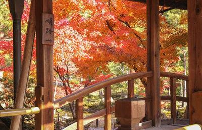 京都市北区の紅葉の名所!紫野・鷹ヶ峰周辺で秋の美しさに触れるスポット総まとめ