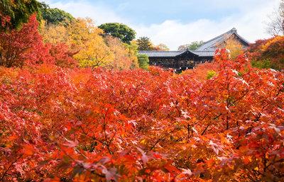 京都市伏見区・山科区の紅葉の名所!深草・醍醐・山科周辺で秋の美しさに触れるスポット総まとめ