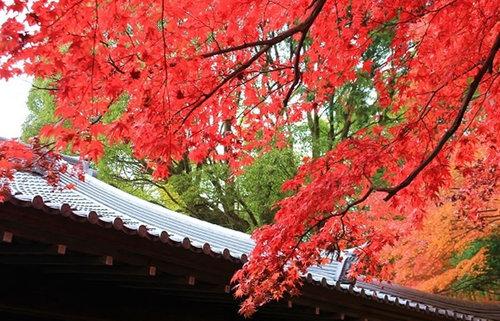 京都の紅葉、約40の名所を総まとめ!エリア別、秋の京都の美しさに触れる紅葉旅