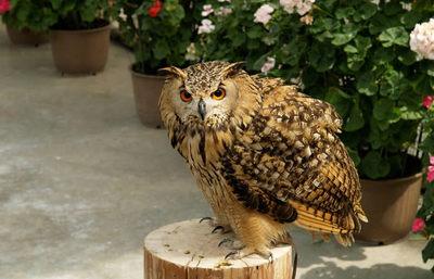 鳥たちと想像以上の触れ合いがスゴイ!掛川花鳥園、鳥と花のローカルテーマパークを巡る旅