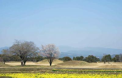 日本最大級の西都原古墳群、花々が咲き乱れる丘陵で古代日向の謎に触れる旅
