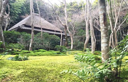 奥嵯峨・祇王寺、美しい苔庭の奥に残る平家物語のエピソードを知る京都旅