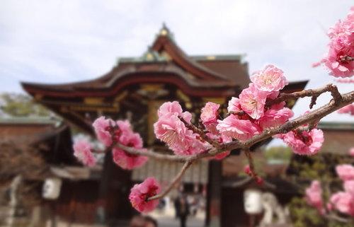 京都の梅の名所で早春の息吹に出会う!京都が誇る本当に美しい梅の名所10選