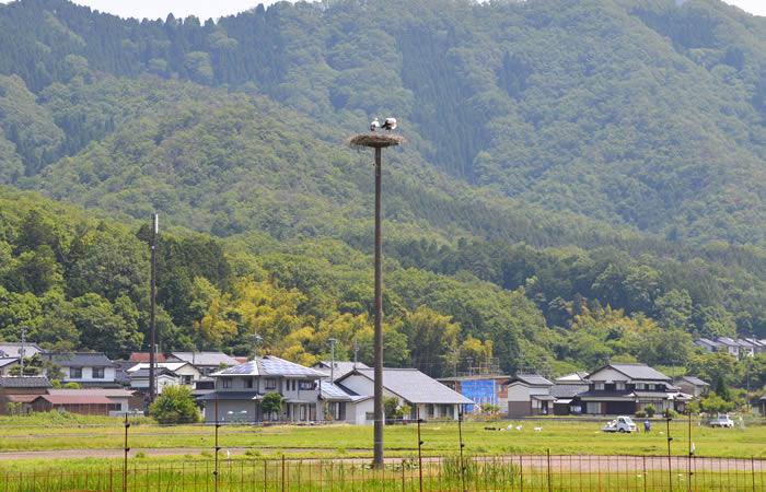 人家のすぐ近くにあるコウノトリの人工巣塔