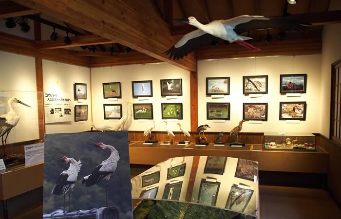 コウノトリを伝える展示の数々