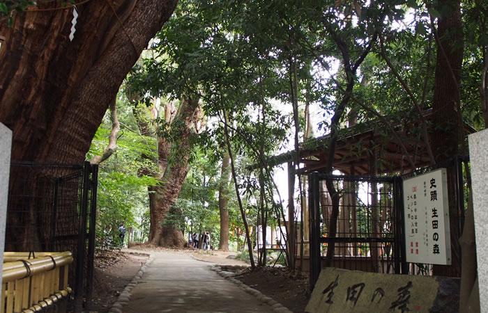 生田の森は源平合戦が繰り広げられた古戦場