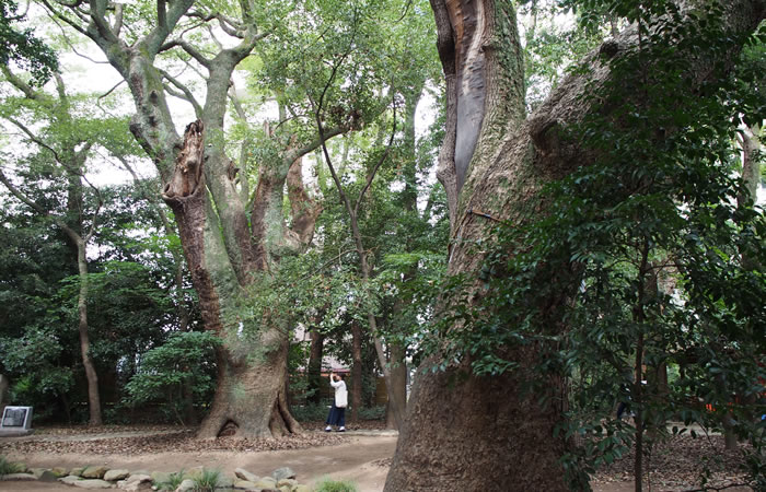 生田の森を歩く