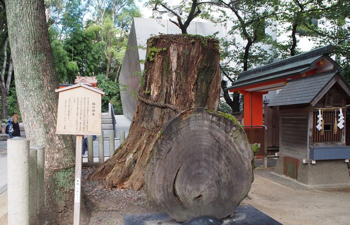 神戸空襲で焼けた楠の神木