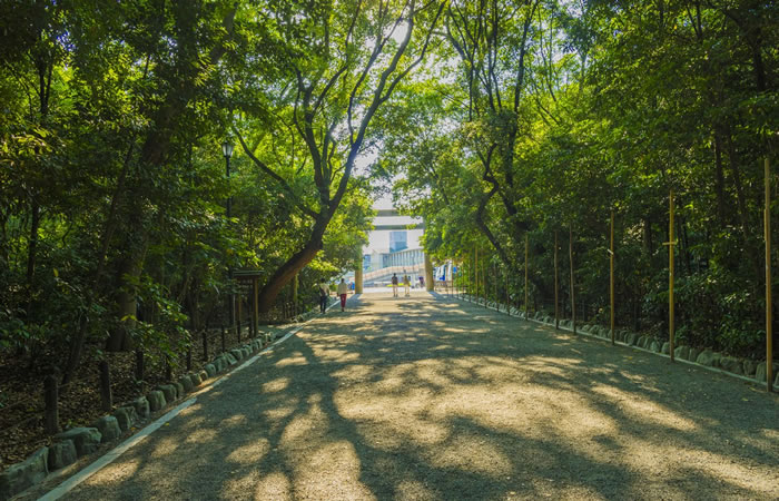 大楠が茂る参道