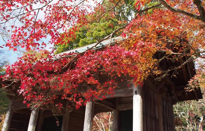 美しい紅葉で赤く染まる東山寺