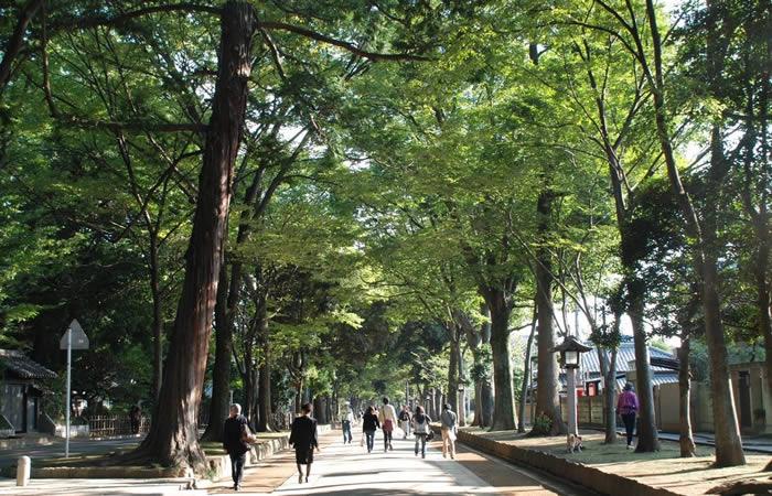 ケヤキ並木の参道