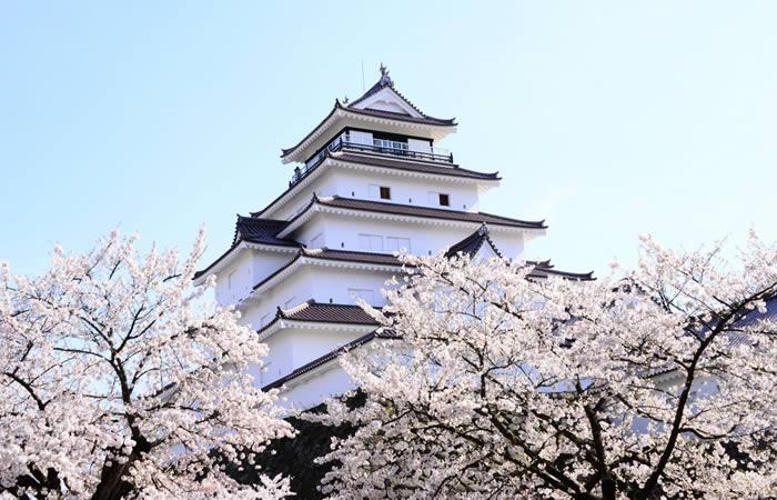 春の桜が映える天守