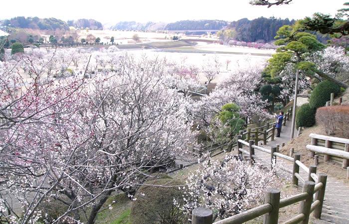 梅林から望む月池と桜川