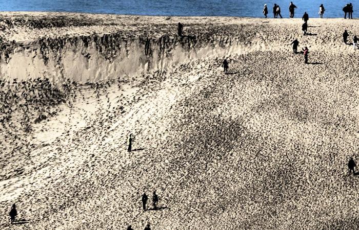 砂丘を日本海側の方へ向けて歩く人々